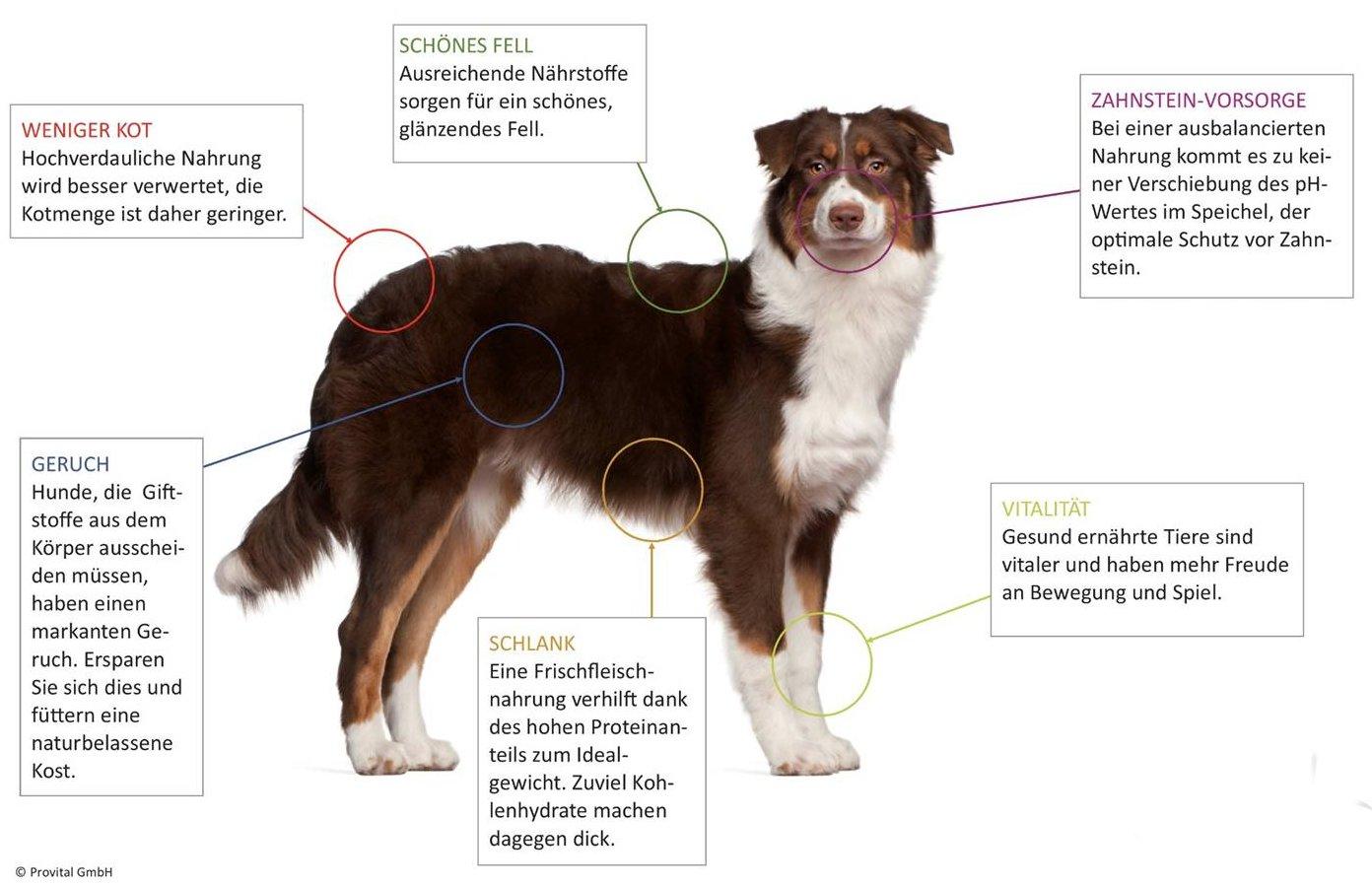 Anifit Hundefutter Vorteile