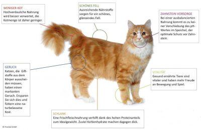 Anifit Katzenfutter Vorteile